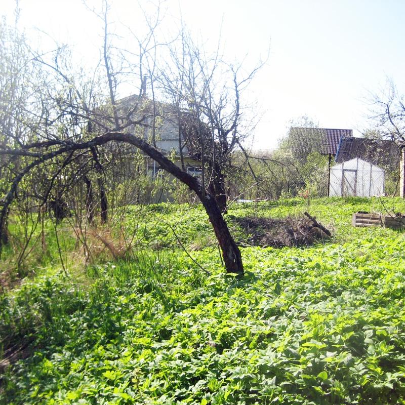 Продаю землю с садом